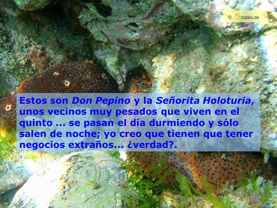 Estos son Don Pepino y la Señorita Holoturia,