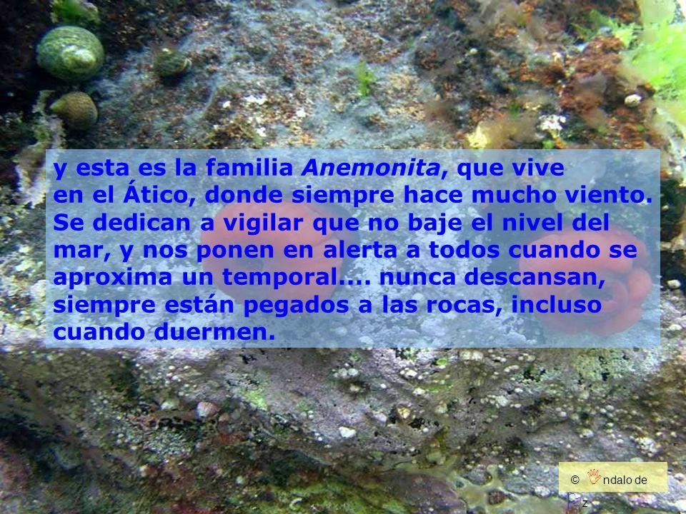 y esta es la familia Anemonita, que vive