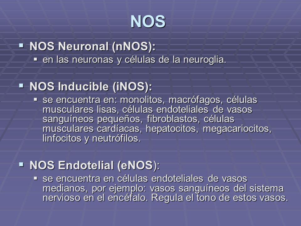 NOS NOS Neuronal (nNOS): NOS Inducible (iNOS): NOS Endotelial (eNOS):