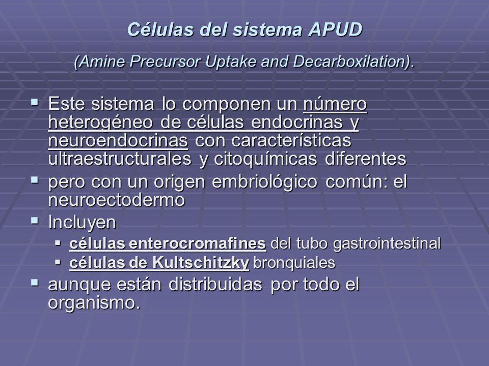 Células del sistema APUD (Amine Precursor Uptake and Decarboxilation).