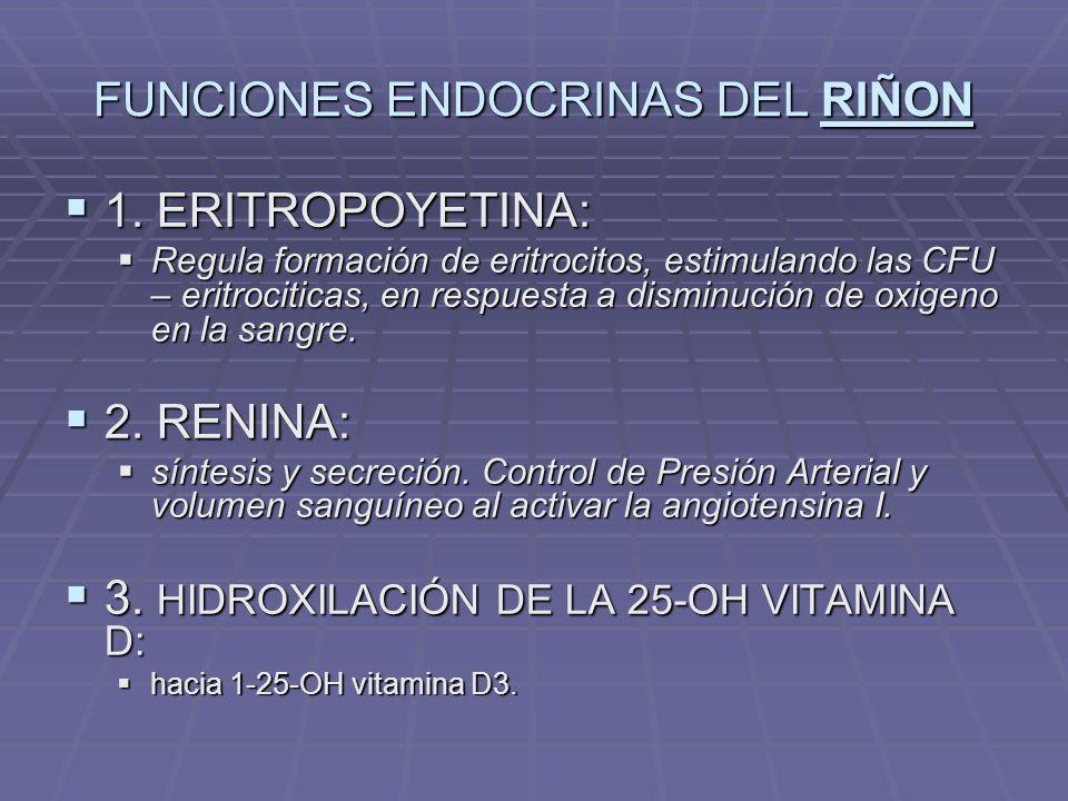 FUNCIONES ENDOCRINAS DEL RIÑON