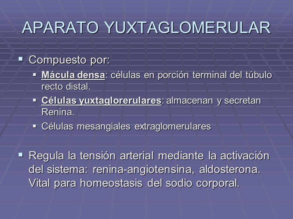 APARATO YUXTAGLOMERULAR