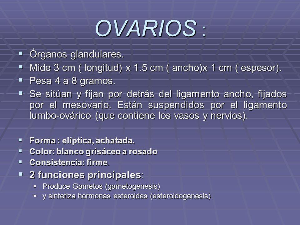 OVARIOS : Órganos glandulares.