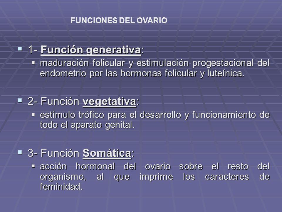 1- Función generativa: 2- Función vegetativa: 3- Función Somática: