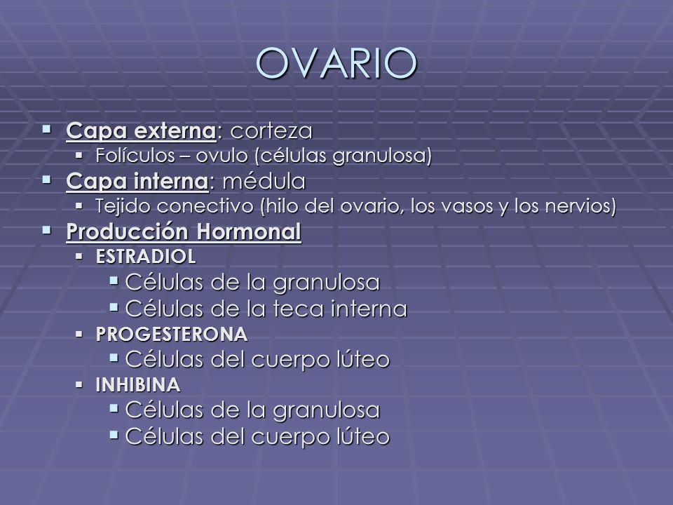 OVARIO Capa externa: corteza Capa interna: médula Producción Hormonal