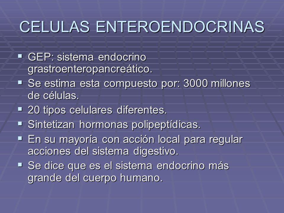 CELULAS ENTEROENDOCRINAS