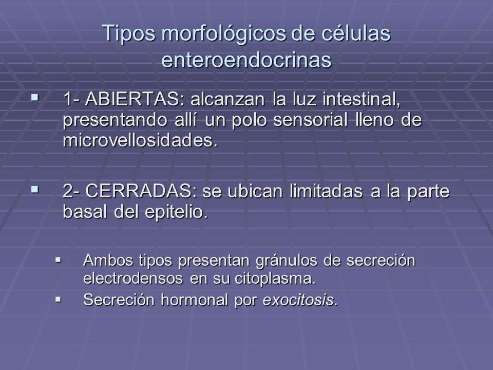 Tipos morfológicos de células enteroendocrinas