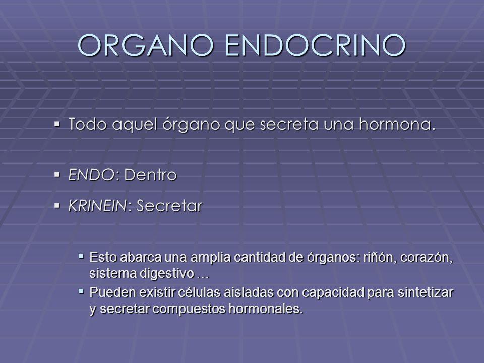 ORGANO ENDOCRINO Todo aquel órgano que secreta una hormona.