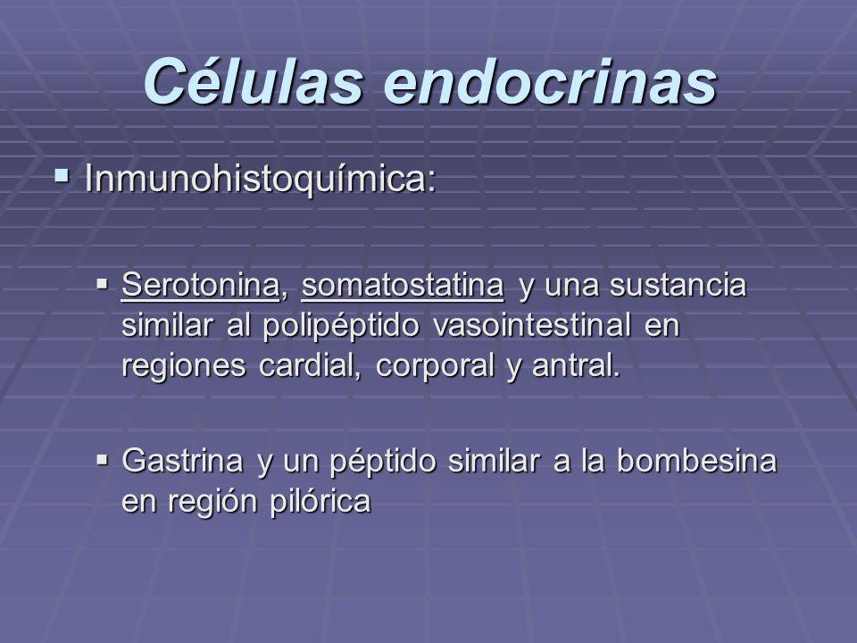 Células endocrinas Inmunohistoquímica: