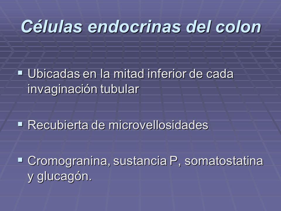 Células endocrinas del colon