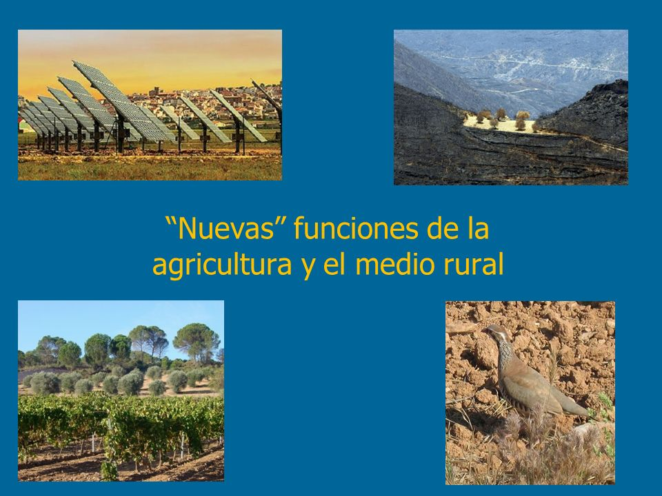 Nuevas funciones de la agricultura y el medio rural