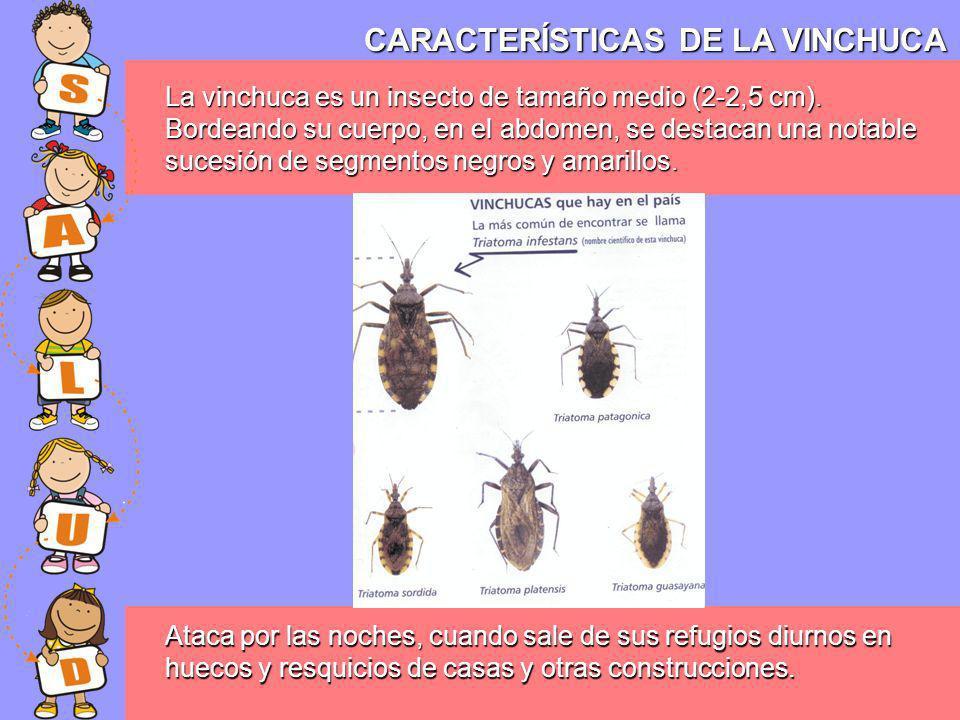 CARACTERÍSTICAS DE LA VINCHUCA