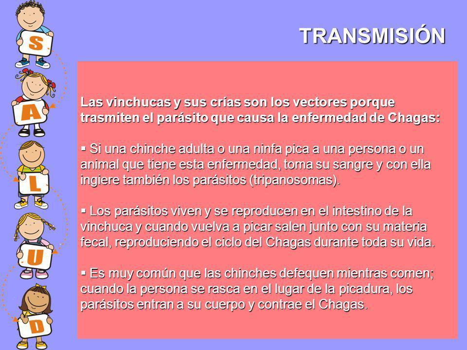 TRANSMISIÓN Las vinchucas y sus crías son los vectores porque trasmiten el parásito que causa la enfermedad de Chagas: