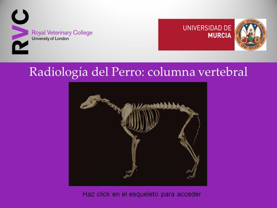 Radiología del Perro: columna vertebral