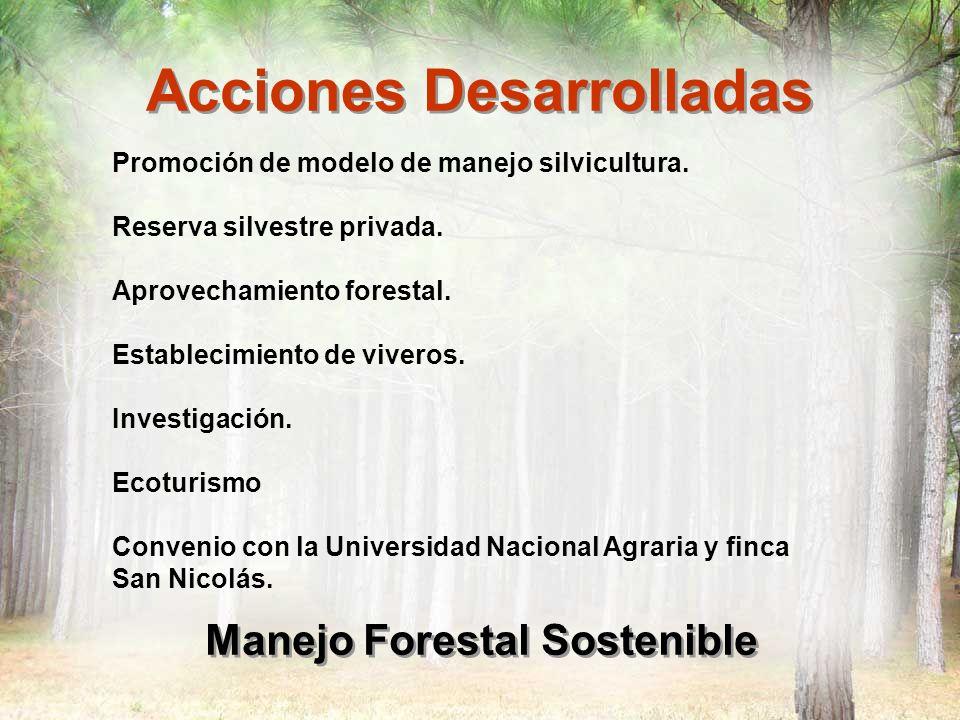 conservaci n y manejo sustentable de los bosques de pino