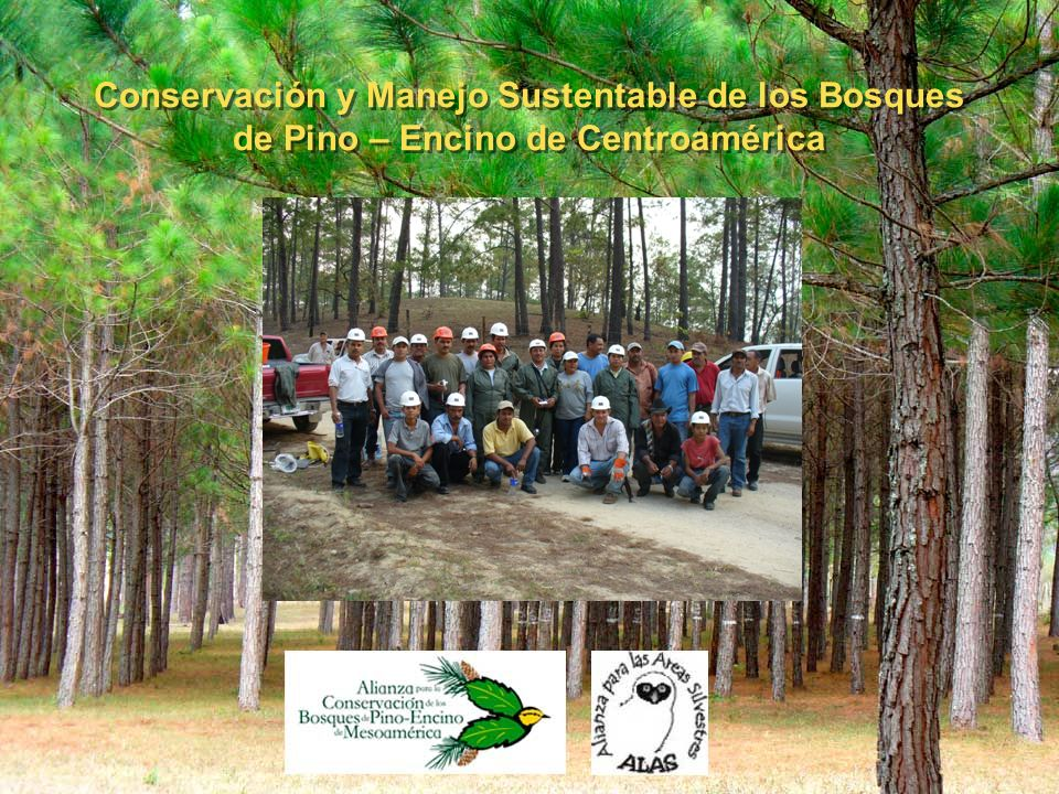 Conservación y Manejo Sustentable de los Bosques de Pino – Encino de Centroamérica