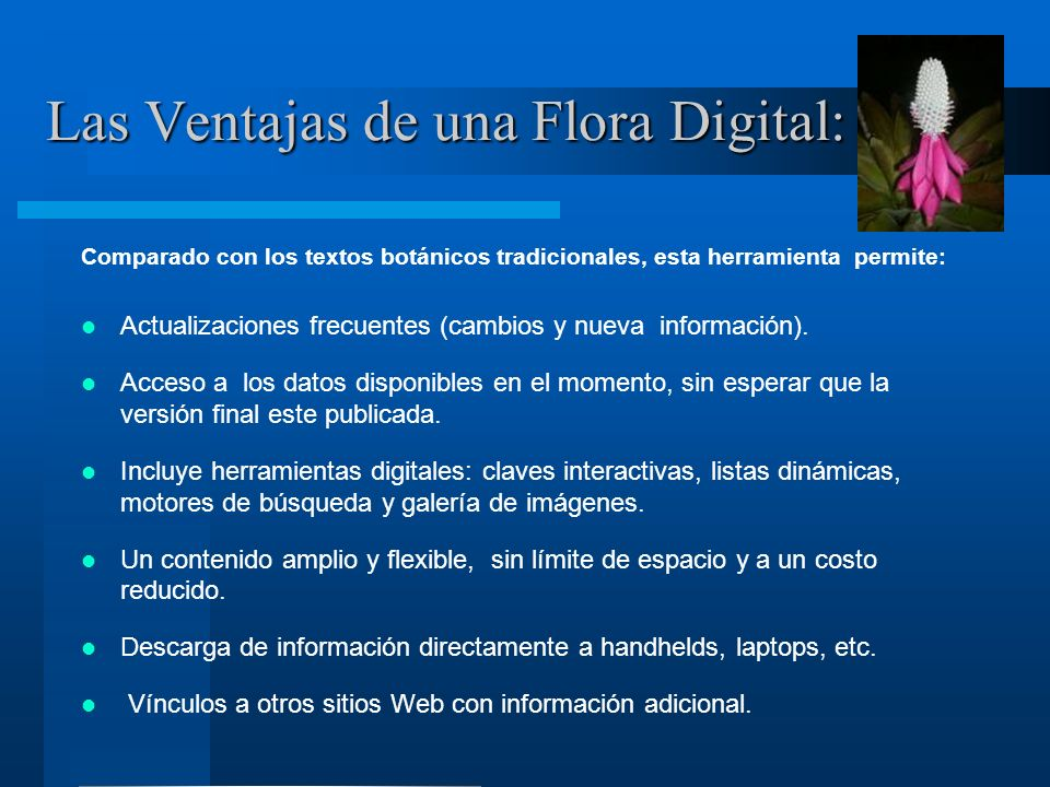 Las Ventajas de una Flora Digital: