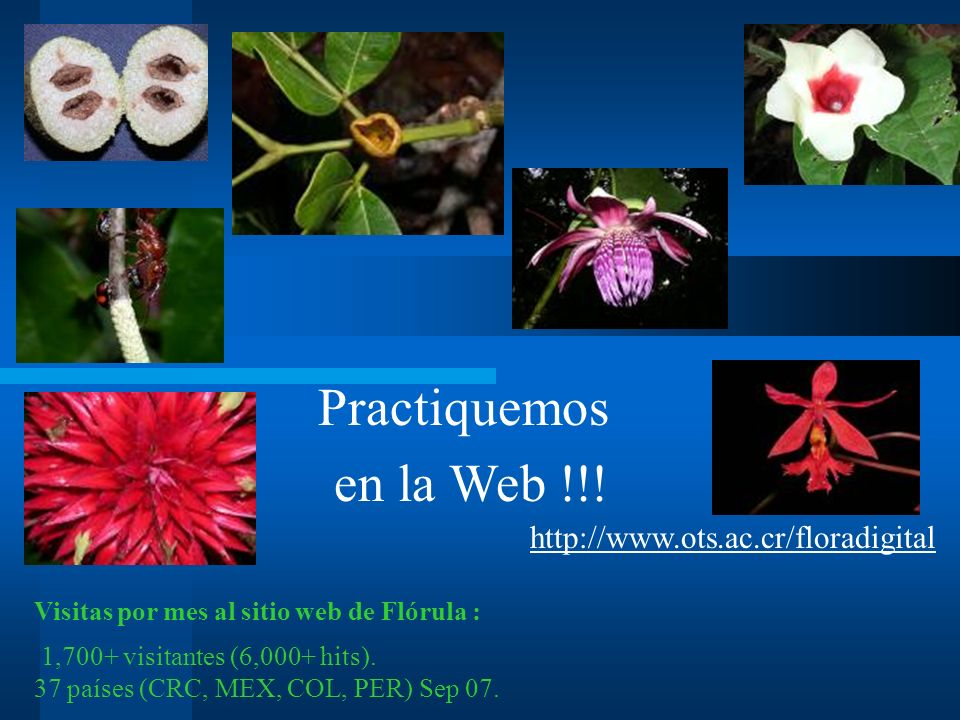Practiquemos en la Web !!! http://www.ots.ac.cr/floradigital