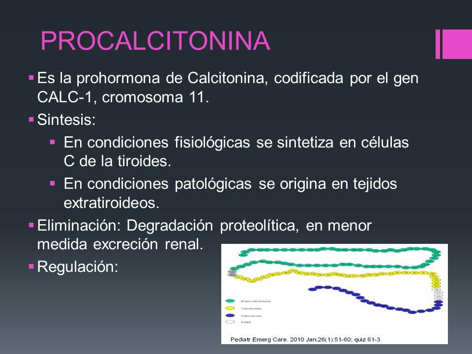 PROCALCITONINA Es la prohormona de Calcitonina, codificada por el gen CALC-1, cromosoma 11. Sintesis: