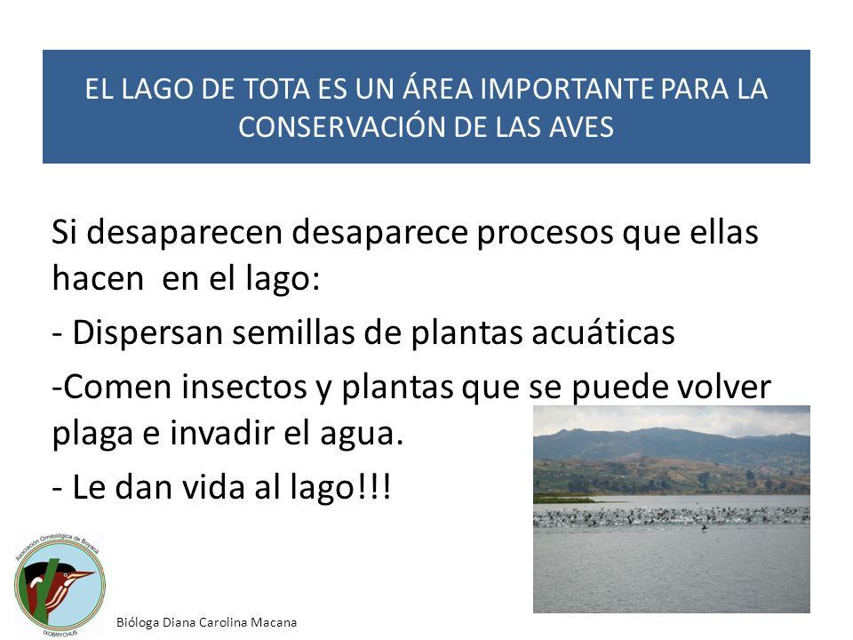 Si desaparecen desaparece procesos que ellas hacen en el lago: