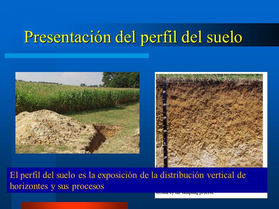 Morfololog a del suelo ppt descargar for Perfil del suelo wikipedia
