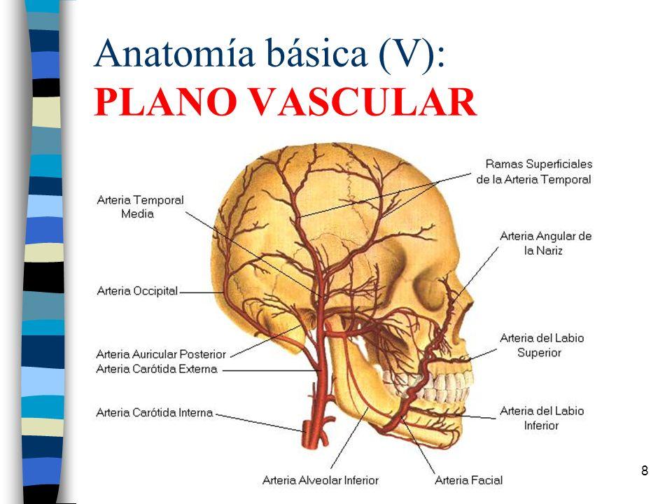Hermosa Anatomía Arteria Facial Ornamento - Anatomía de Las ...