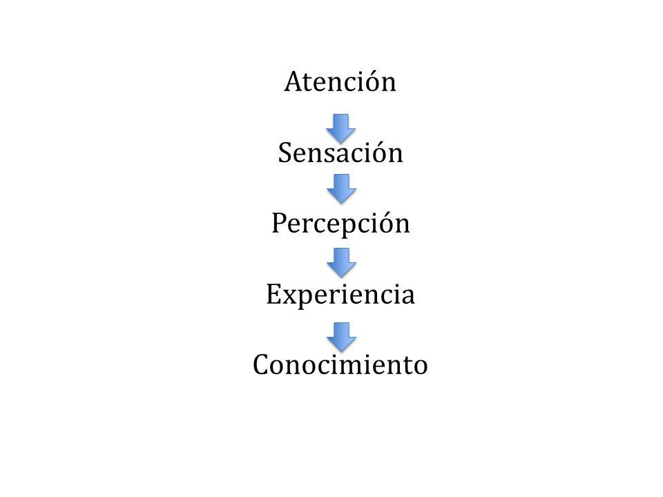 Atención Sensación Percepción Experiencia Conocimiento