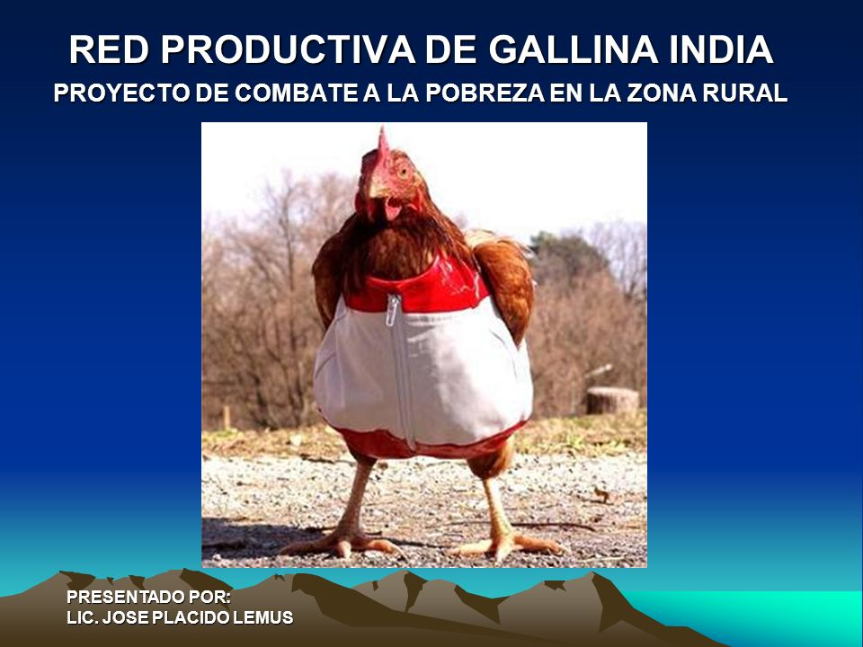 RED PRODUCTIVA DE GALLINA INDIA