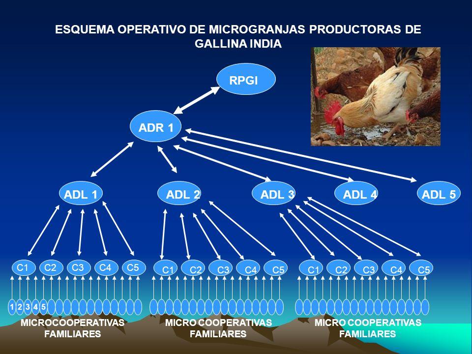 ESQUEMA OPERATIVO DE MICROGRANJAS PRODUCTORAS DE GALLINA INDIA