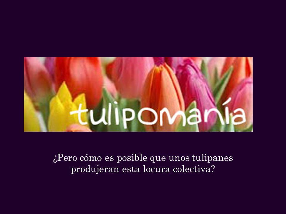 ¿Pero cómo es posible que unos tulipanes produjeran esta locura colectiva