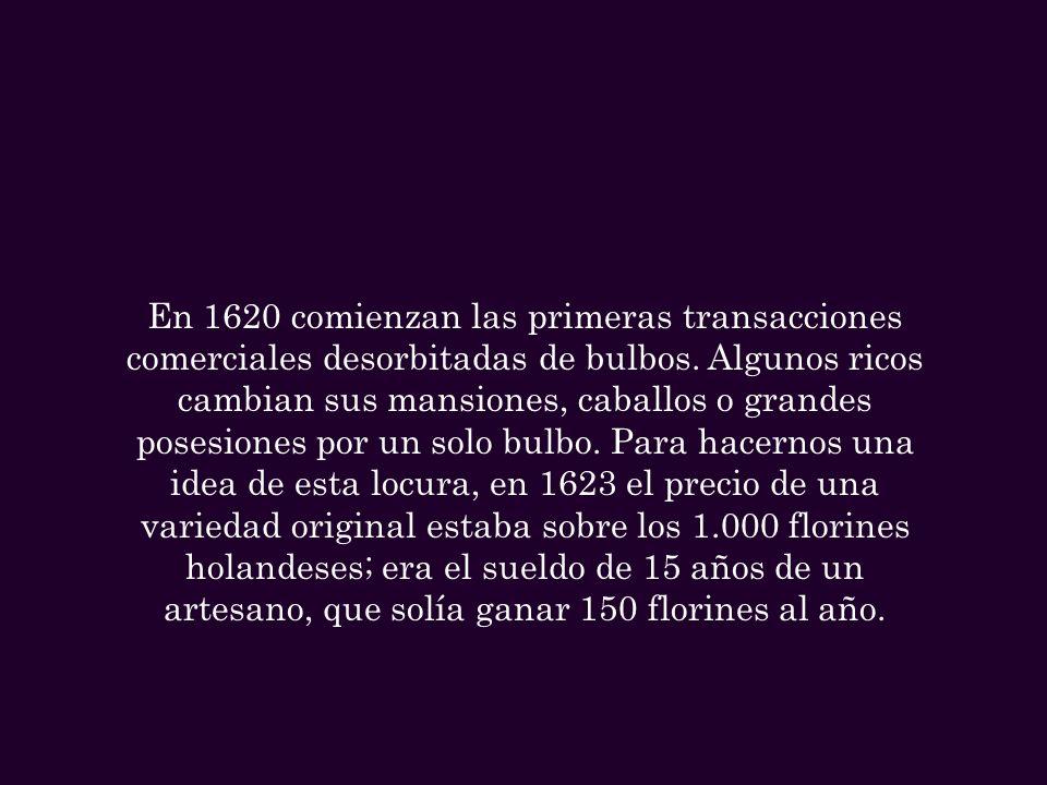 En 1620 comienzan las primeras transacciones comerciales desorbitadas de bulbos.