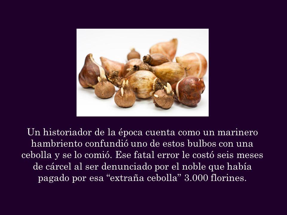 Un historiador de la época cuenta como un marinero hambriento confundió uno de estos bulbos con una cebolla y se lo comió.