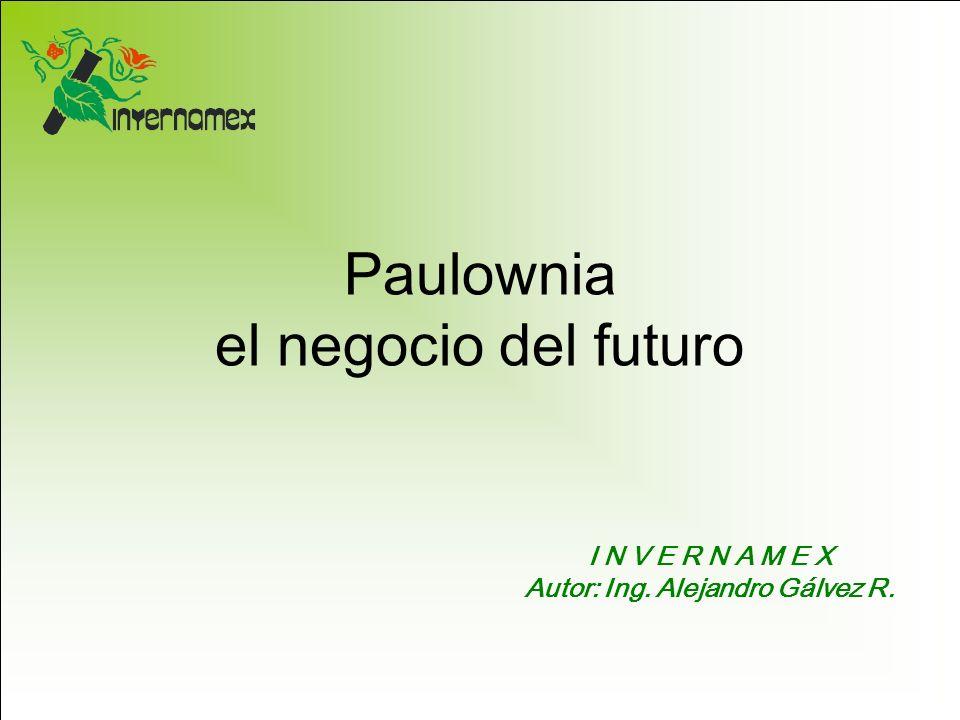 Paulownia el negocio del futuro