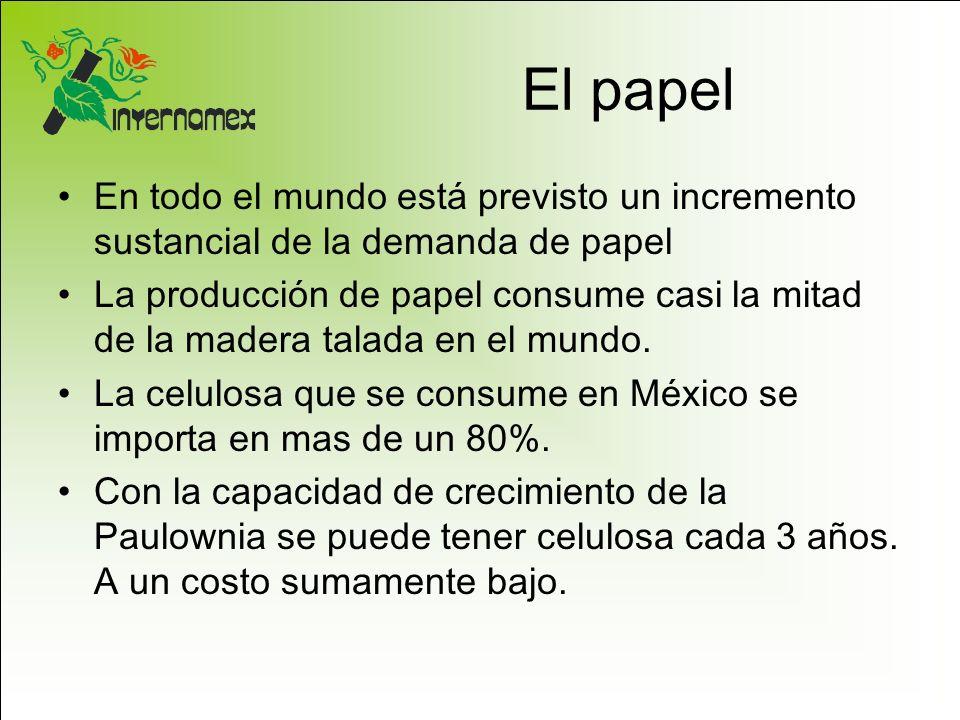 El papel En todo el mundo está previsto un incremento sustancial de la demanda de papel.