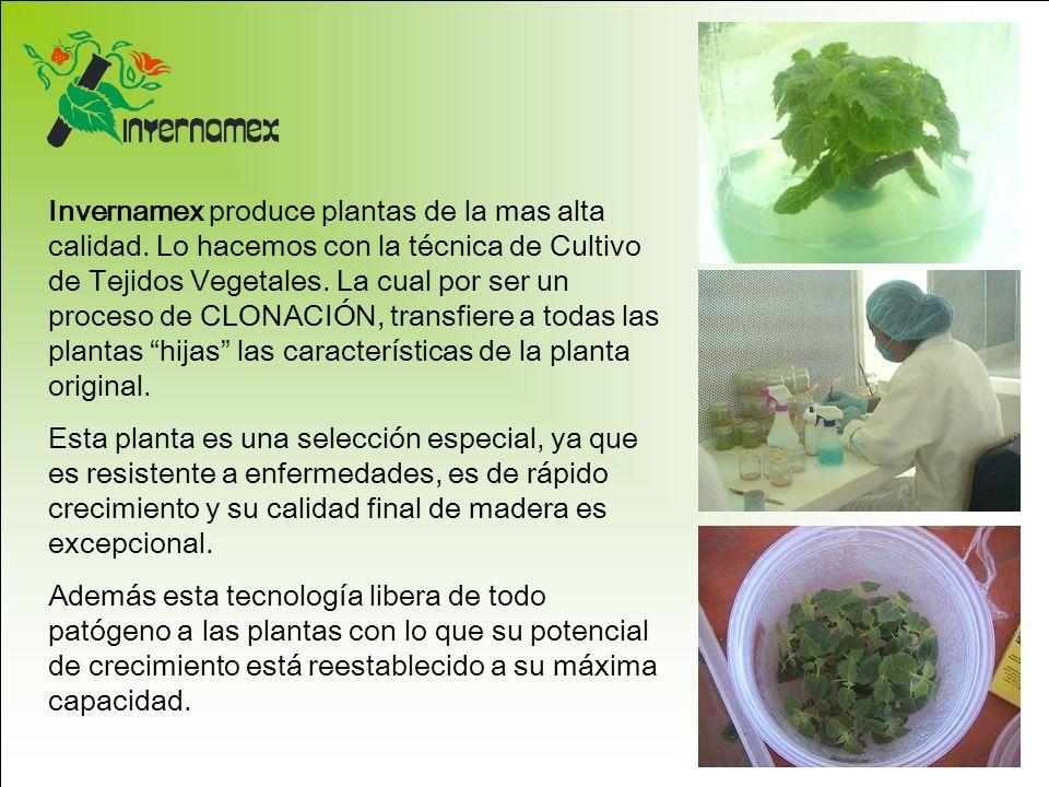 Invernamex produce plantas de la mas alta calidad