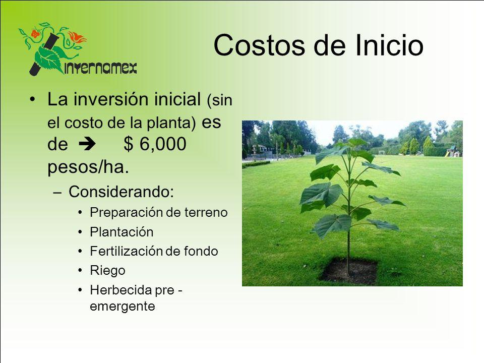 Costos de Inicio La inversión inicial (sin el costo de la planta) es de  $ 6,000 pesos/ha. Considerando: