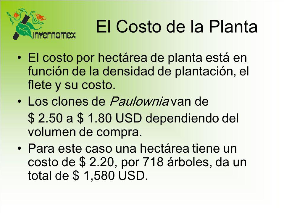 El Costo de la Planta El costo por hectárea de planta está en función de la densidad de plantación, el flete y su costo.