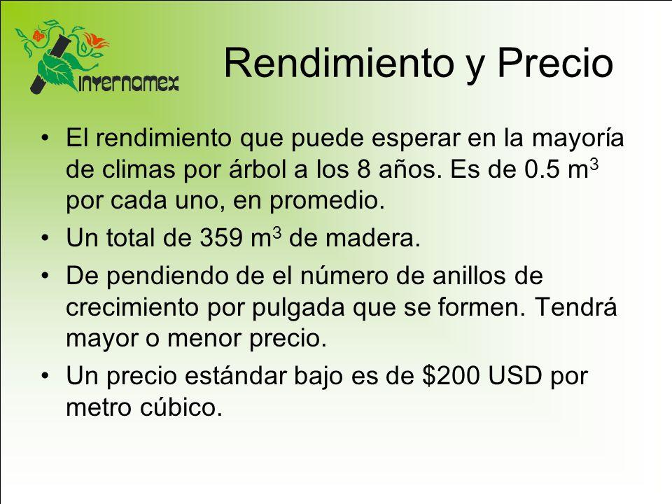 Rendimiento y Precio El rendimiento que puede esperar en la mayoría de climas por árbol a los 8 años. Es de 0.5 m3 por cada uno, en promedio.