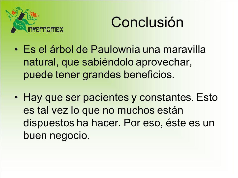 Conclusión Es el árbol de Paulownia una maravilla natural, que sabiéndolo aprovechar, puede tener grandes beneficios.