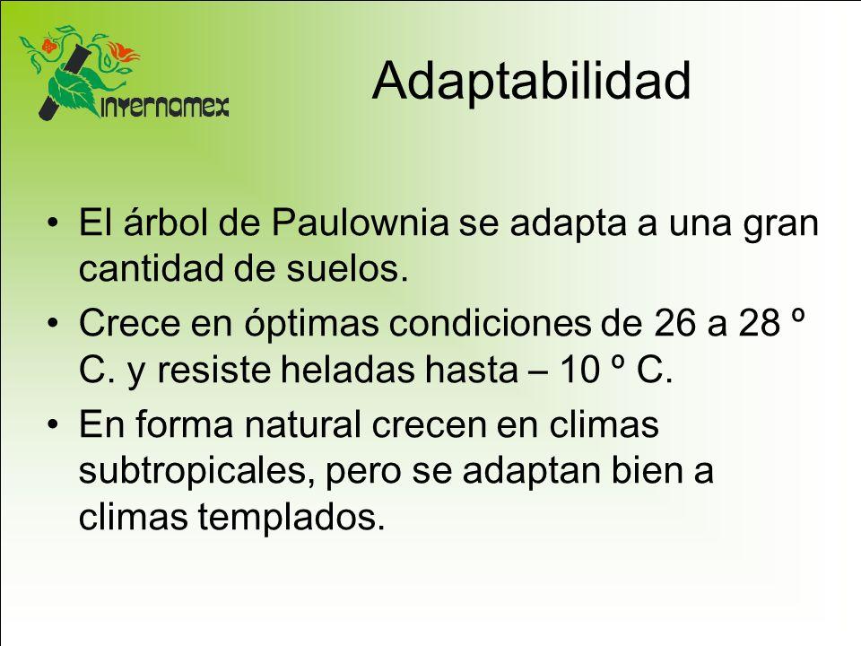 Adaptabilidad El árbol de Paulownia se adapta a una gran cantidad de suelos.