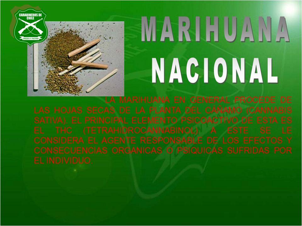 MARIHUANA NACIONAL.