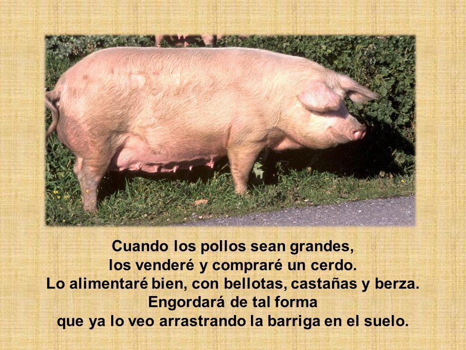Cuando los pollos sean grandes, los venderé y compraré un cerdo.