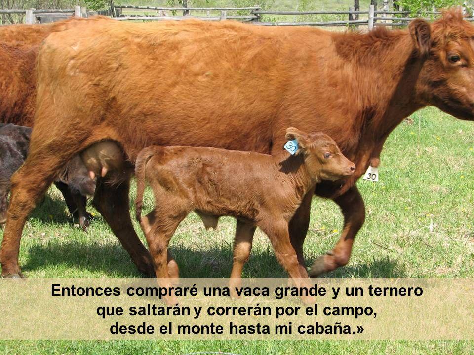Entonces compraré una vaca grande y un ternero