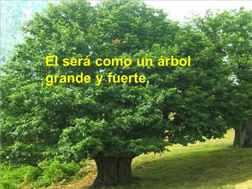 Él será como un árbol grande y fuerte,