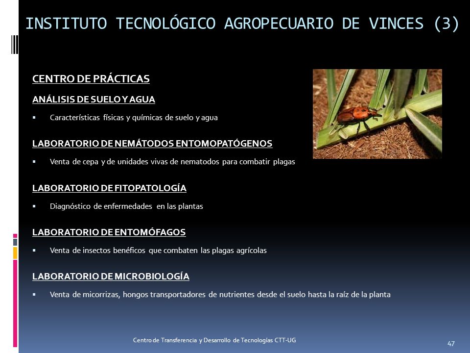 INSTITUTO TECNOLÓGICO AGROPECUARIO DE VINCES (3)