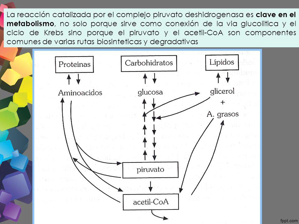 glic243lisis ciclo de krebbs ciclo del 225cido tricarbox237lico