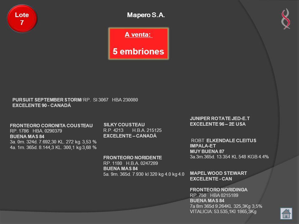 5 embriones Lote 7 Mapero S.A. A venta: