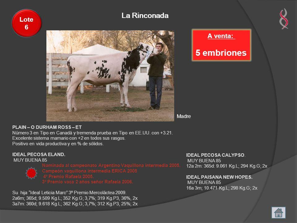 5 embriones La Rinconada Lote 6 A venta: Madre
