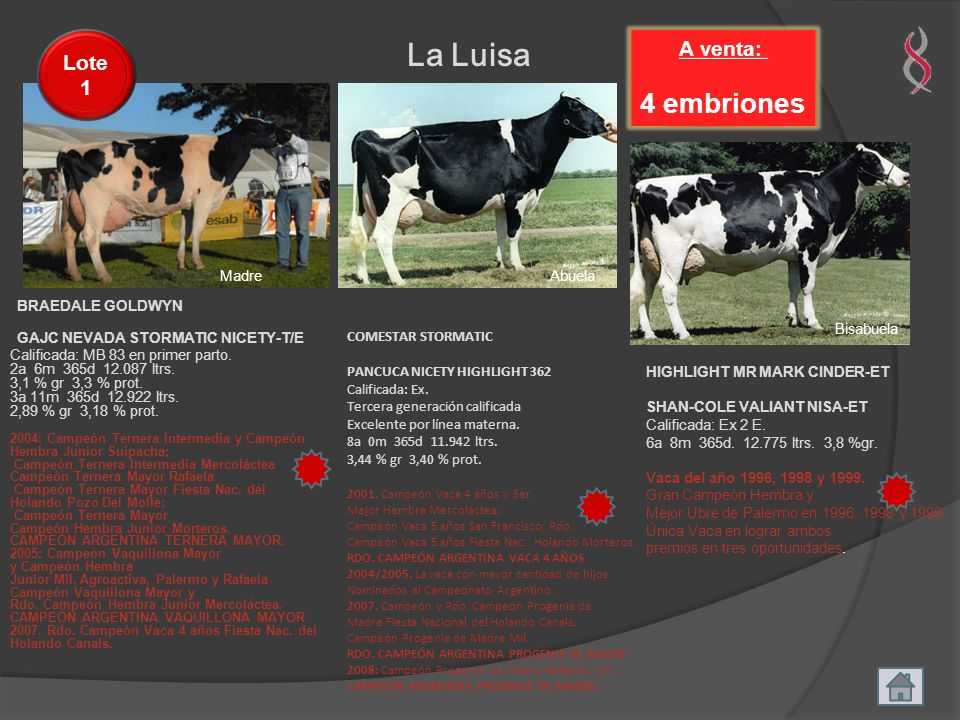 La Luisa 4 embriones GAJC NEVADA STORMATIC NICETY-T/E A venta: Lote 1