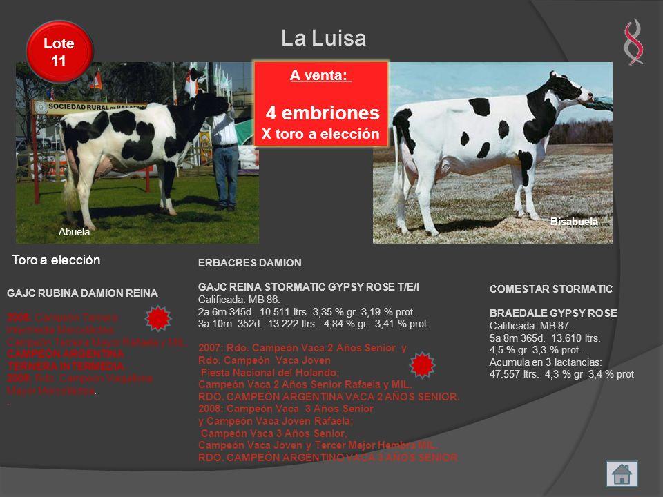La Luisa 4 embriones Lote 11 A venta: X toro a elección